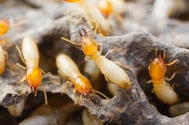 Termite proofing services islamabad