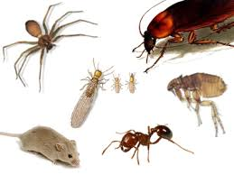 Termite Proofing and Pest Control Services