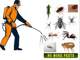 Insecticide Pest Control Services